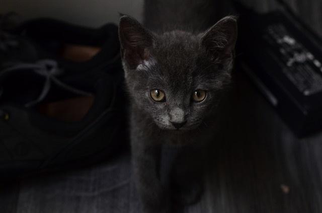 Kuroneko-BlackCat