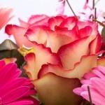 母の日プレゼント&ギフト『フラワーアレンジメント』TOP