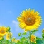 夏のイラスト無料画像サイト集TOP