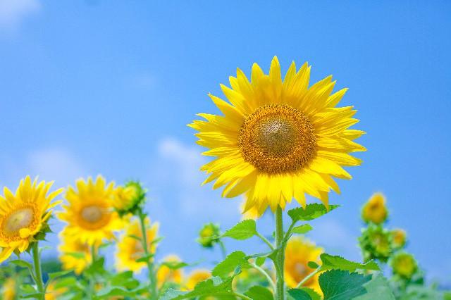 「夏フリー画像」の画像検索結果